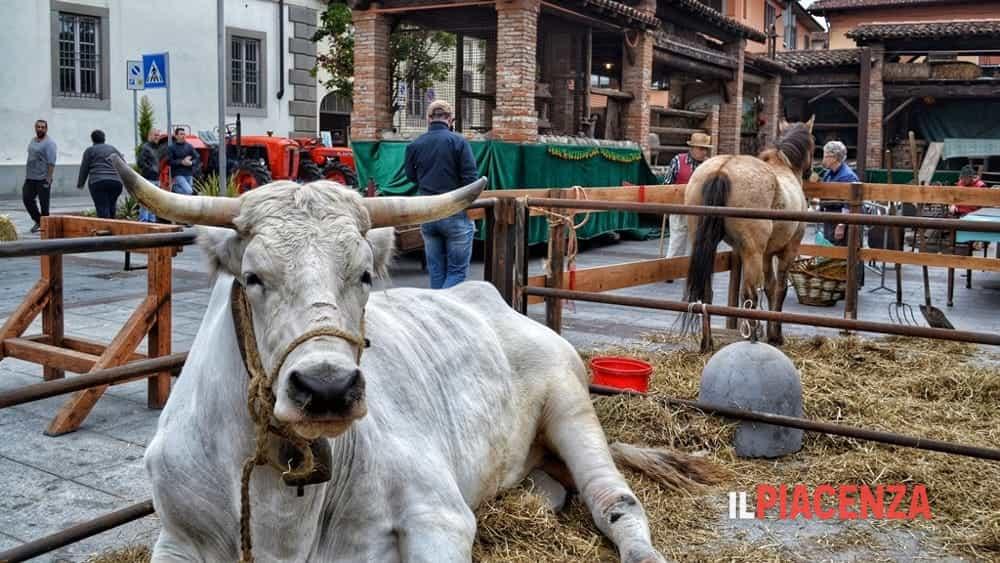 Una fattoria in piazza duomo con asini buoi cavalli e capre for Piani di fattoria con foto